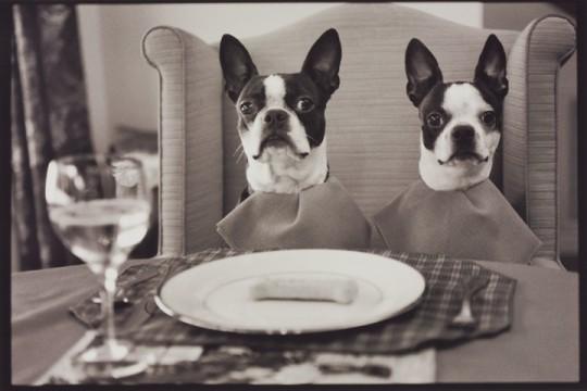 Boston Terriers Dieting, 2000
