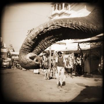 Elephant's trunk, Udaipur, India, 1996
