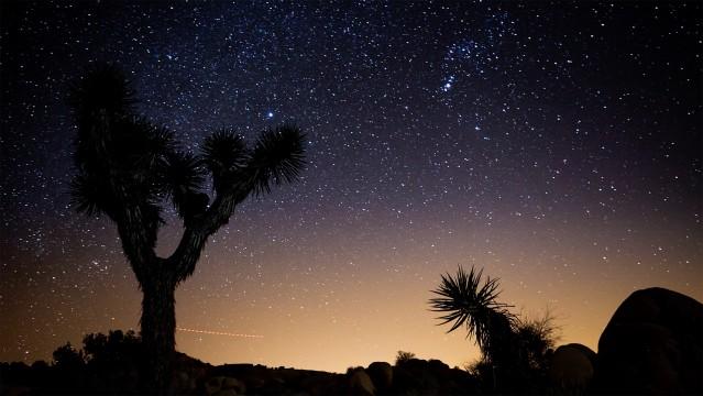 Film still of Joshua Tree from California Roadtrip
