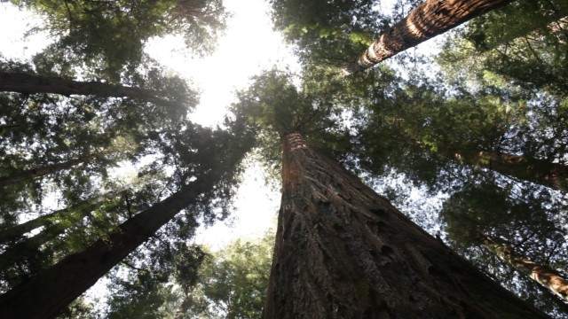 California Road Trip (Redwoods)