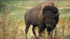 animals_of_the_american_west