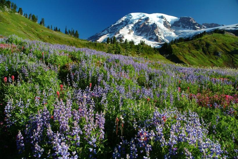 Mount Rainier National Park, Photo by Craig Mellish